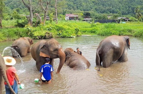 Ran-Tong elephant save and rescue